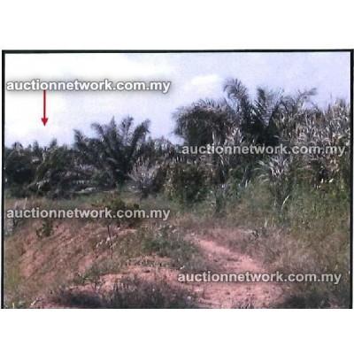 Lorong Bani, Kampung Jalan Kebun, 40460 Shah Alam, Selangor